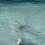 "Thumbnail: Margaret Rinkovsky - Coastal Site 2, 60x48"""