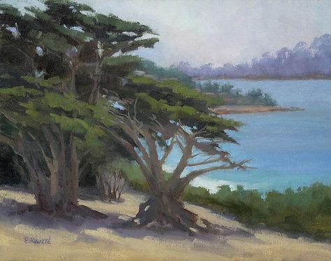 """Ellen Howard - Coastal Cypress, 11x14"""""""