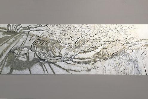 "Margaret Niven - Shadow of Open Spaces 2, 40x60"""