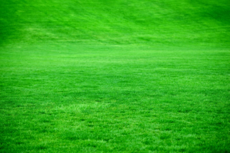 grass_background.jpg