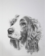 portrait drawing of dog