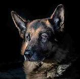 small photo dog.jpg