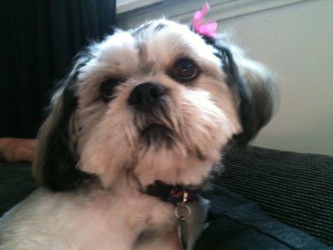 dog photo sample