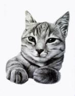 cat portrait pencil