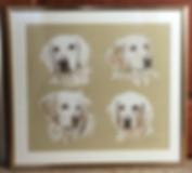 dog portraits sample 2