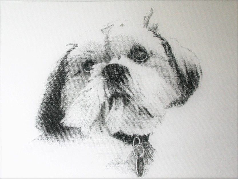 portrait drawing dog
