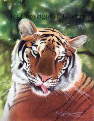 tiger pastel drawing