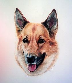 pastel dog drawings