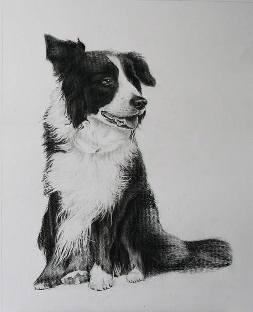 pencil dog portrait