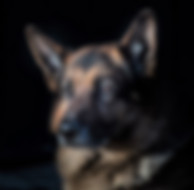 dog photo reference