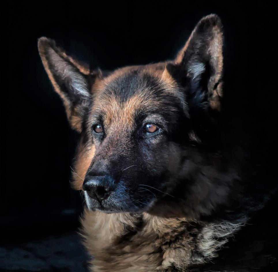 animal-canine-cute-236622 copy.jpg