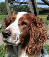 sample dog photo