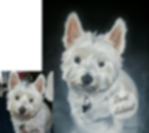 portrait from a photo dog