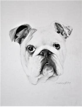 dog portrait gallery
