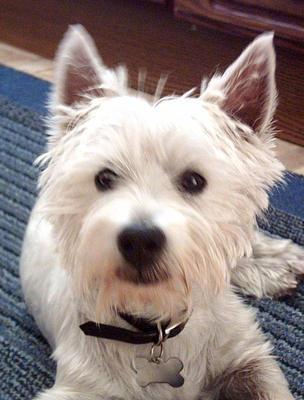 dog sample photo