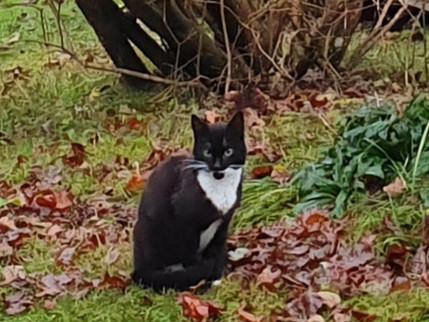 Vem vet något om denna katt?