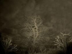 Nocturnal Wonderworld