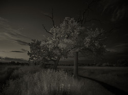 2_trees_B