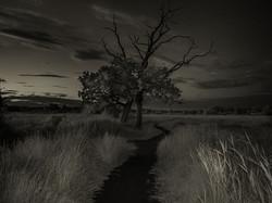 2_trees_A