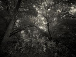 Wild poems wood