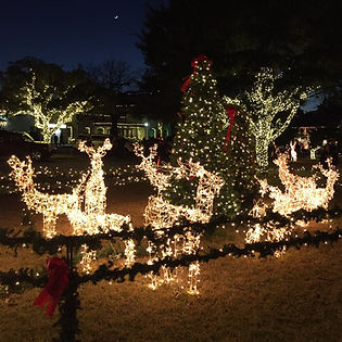 Reindeer at CH_edited.jpg