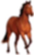 horse-hd-png-horse-png-transparent-image