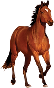 horse-hd-png-horse-png-transparent-image