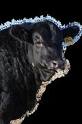 bull-left.png