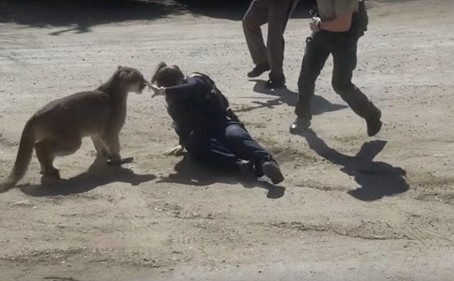A witness captured the moment when a Colorado deputy escaped the jaws of a mountain lion
