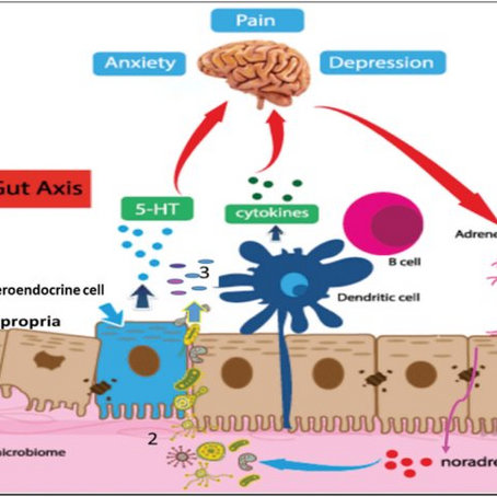 Stress and its impact on Intestinal Epithelial Cells