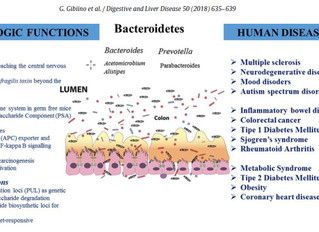 Meet your Microbiome: Bacteroidetes