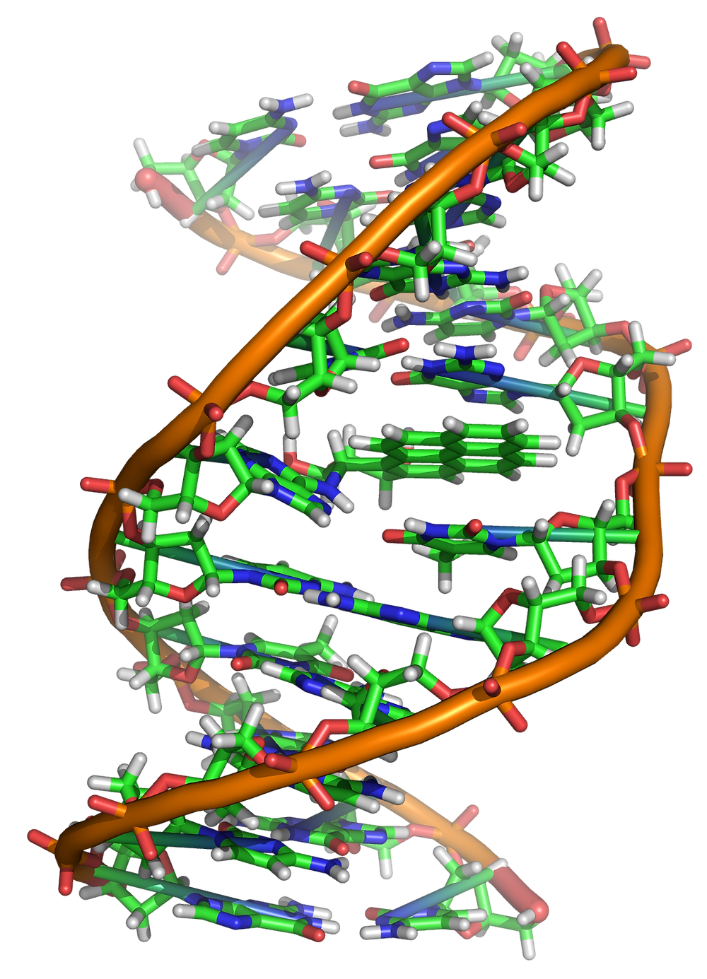 Benzopyrene_DNA_adduct_1JDG.png. courtesy of wikipedia