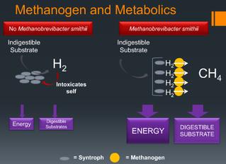 Methane Positive SIBO