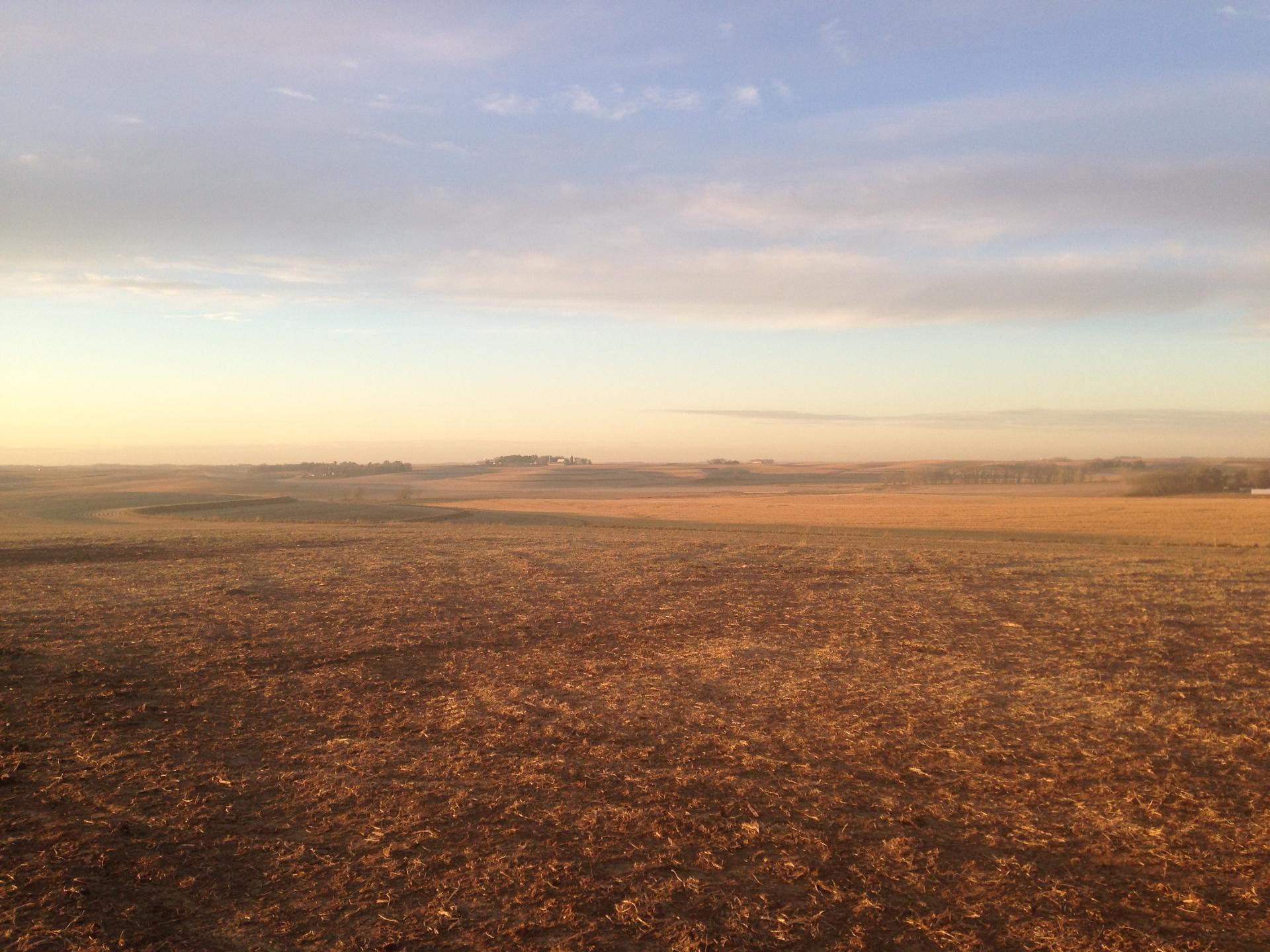 Soybean Field in Western Iowa