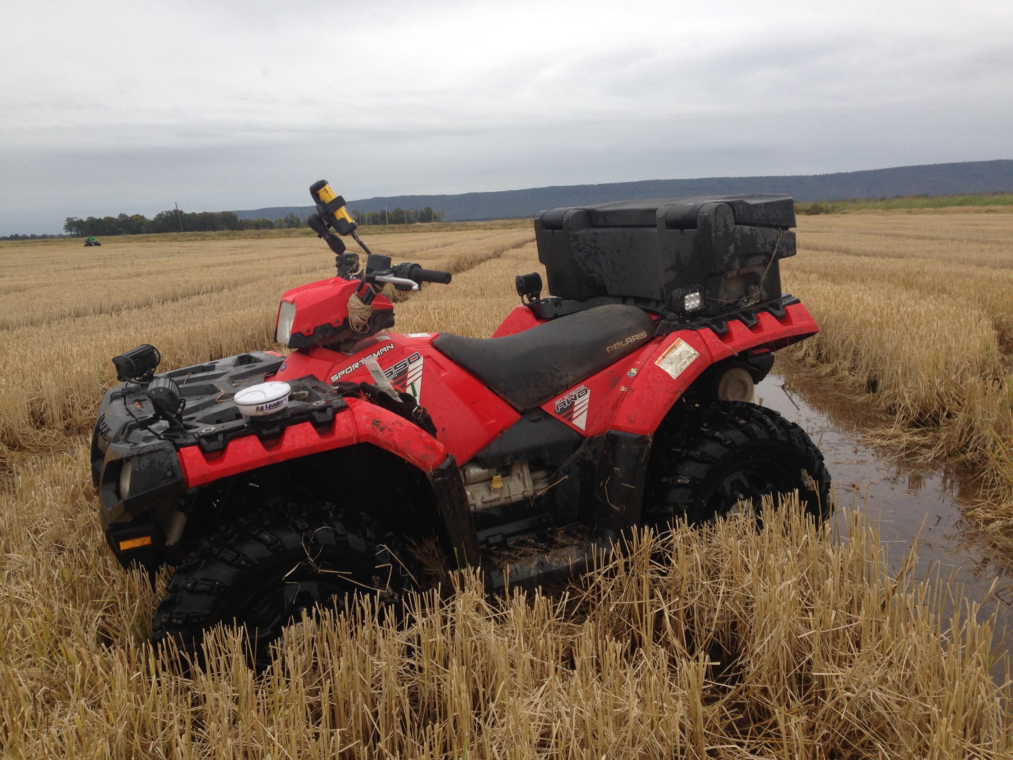 Arkansas Rice Fields