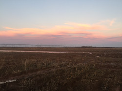 Pivots in Texas