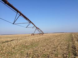Irrigated Corn Field