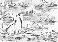 DAY 15: Fox