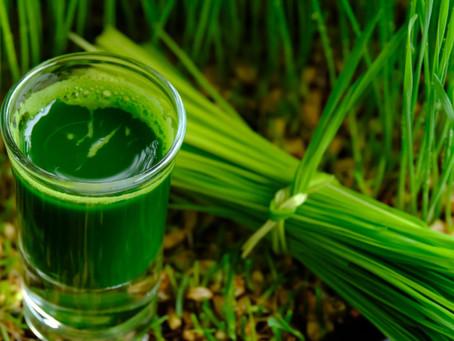 Why Drink Wheatgrass?
