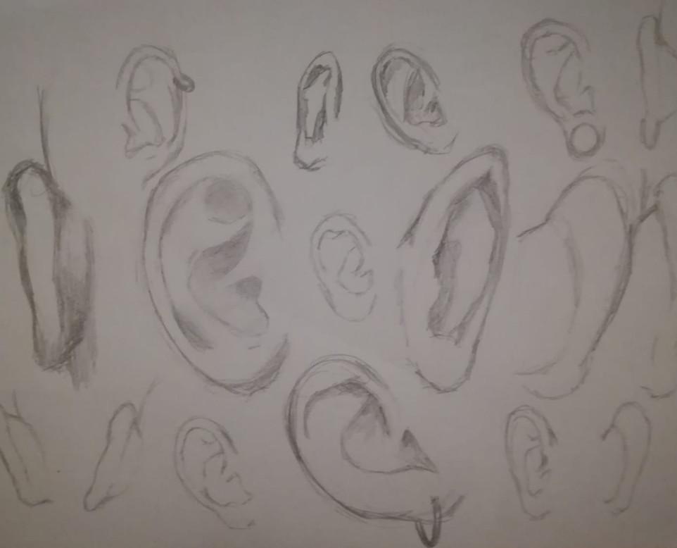 Bodyparts & Anatomy 5.jpg