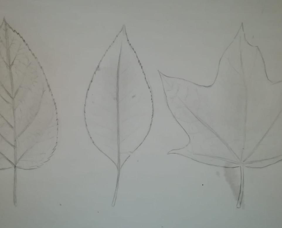 Plants 5.jpg