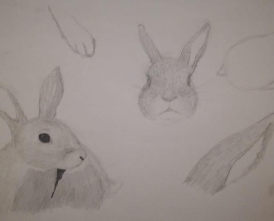 Animals 4.jpg