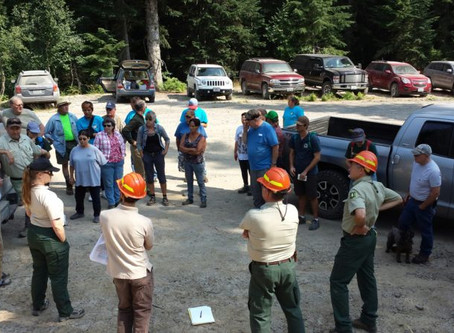 DNR Awards $1.8 Million in Forest Restoration Grants to Forest Collaboratives in Washington