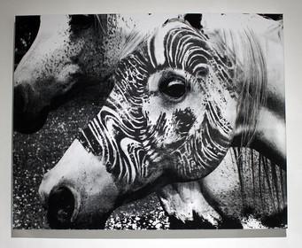 Silkscreen Zebra