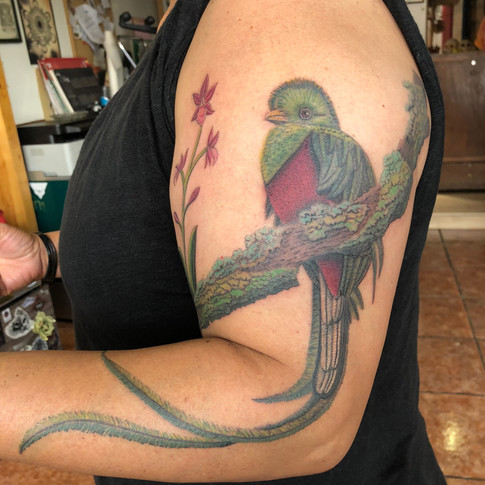 Animal color bird tattoo