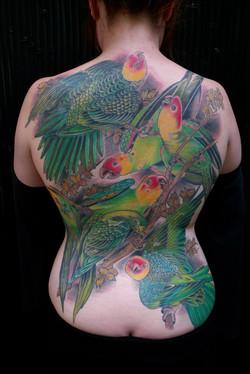 Full Back Parrot Tattoo
