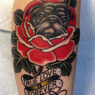 Pug in a rose