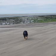 Dog walking at local beach