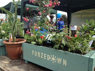 Furzedown Festival success