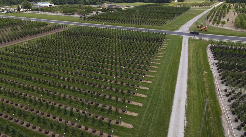 Waldbart Nursery Illinois Location